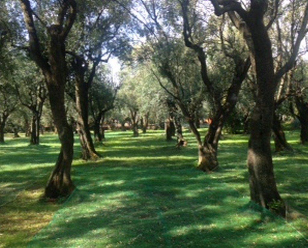 Tuscany Olive Grove Wedding
